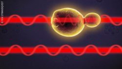 Image: The two light paths of a cell ; Copyright: Yen Strandqvist